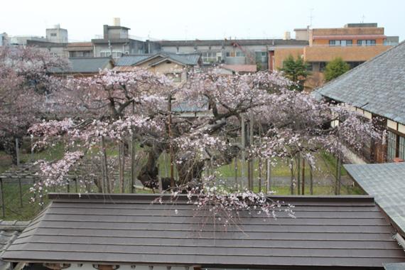 4月2日の城東窟の桜